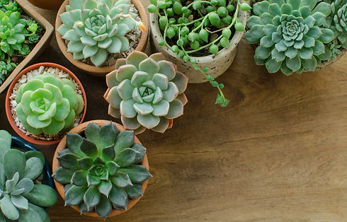 Top View of Various types of mini green