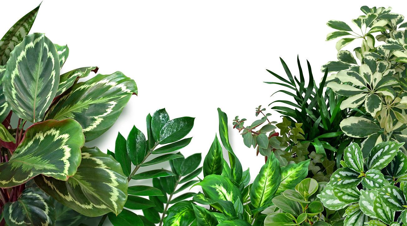 Set of green houseplants isolated on whi