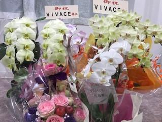 10月2日 VIVACEオープン!