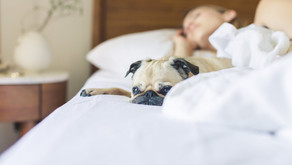 Why Getting A Good Night's Sleep Is So Important