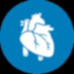 MRI Cardiac Positioning
