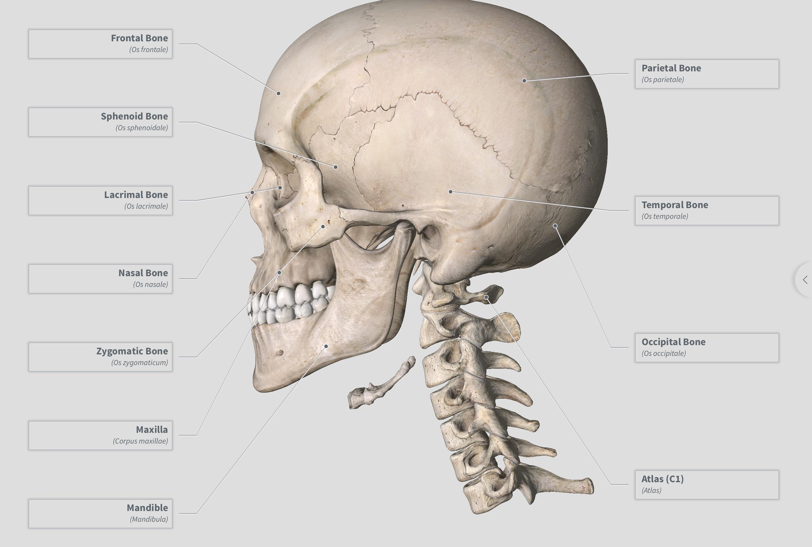 Radiologyedu Skull Anatomy