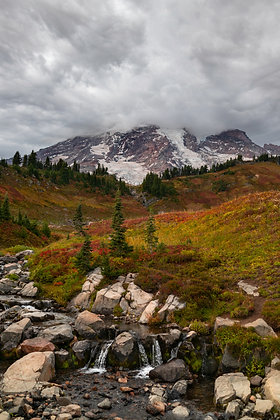 Mt. Rainer National Park