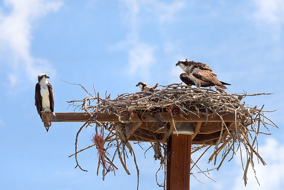 Hawk's Nest in Eagle, Idaho