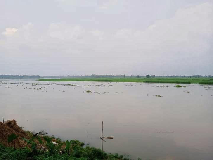 the-plight-of-jute-farmers