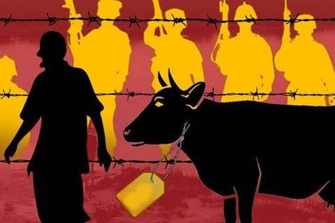 Cattle trafficking in Malda