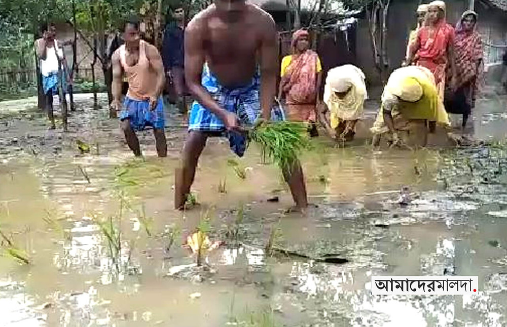 Protests erupted by planting paddy trees on the muddy roads