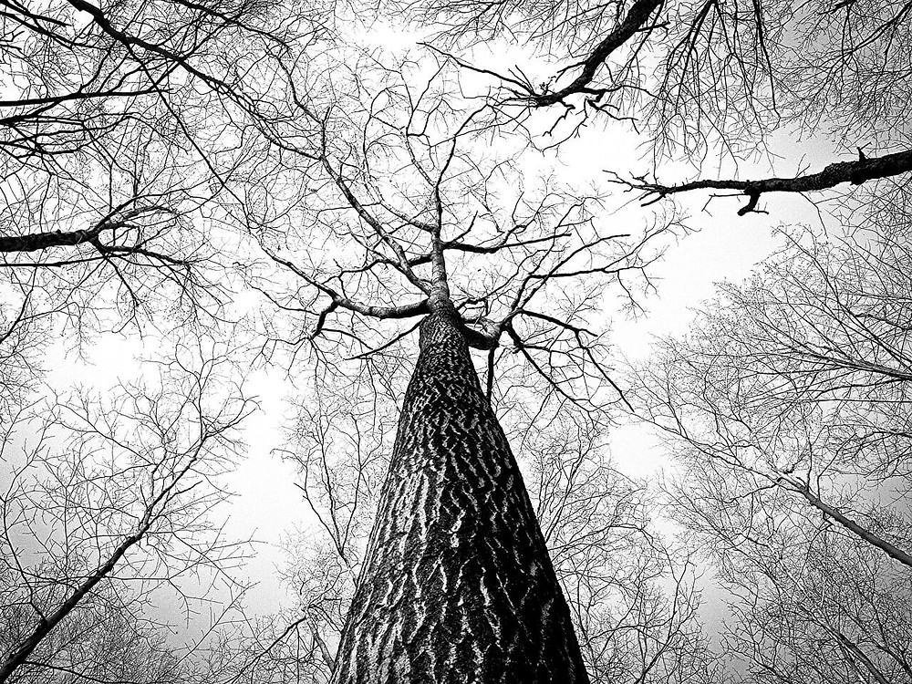 Man found dead tied to a tree in malda