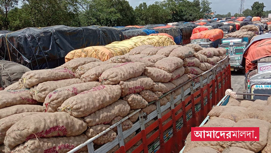 Government bans onion exports