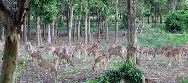 Adina Deer Forest