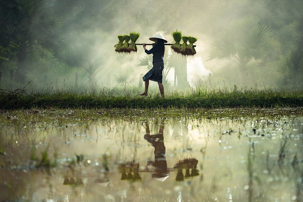 বানভাসি কৃষকদের ক্ষতিপূরণ আমলাদের পকেটে