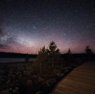 Yellowstone_Pine_Milky_Way_LrPS.jpg