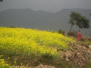 NepalPhotosNovember5-November11 031.JPG