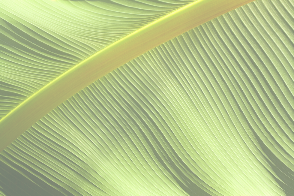 Leaf_edited_edited.png