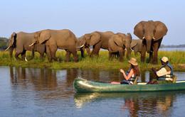 wild-zambia-inset1.jpg