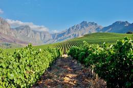 Oldenburg-Vineyards-South-Africa.jpg.120