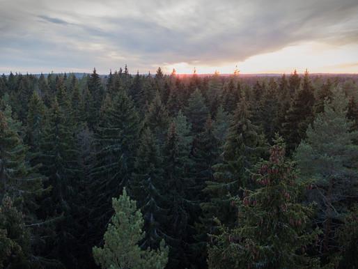 Laitoimme rahat (tonttu)metsään