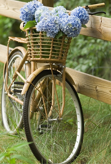 A bicycle with flowers in basket.