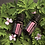 Thumbnail: Geranium Essential Oil