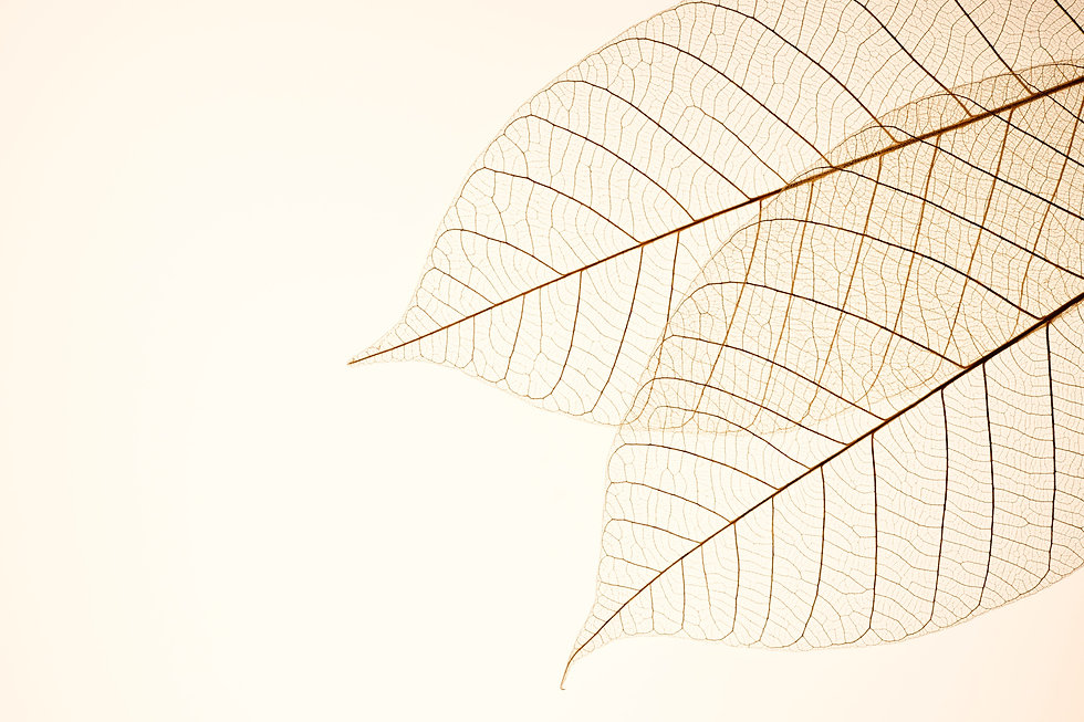 Two Dried Leaves_edited.jpg