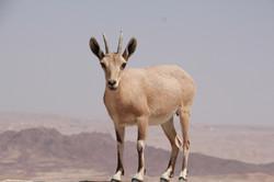 wild life in the desert