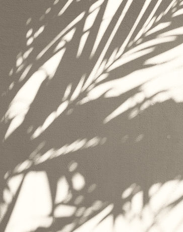 Plant%20Shadow_edited.jpg