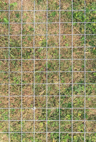 Grass Grid, photography by Aam Solleveld