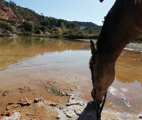 Refreshments_#establodecrystal #horserid
