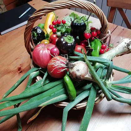 Our own organic produce, thanks to my ho
