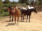 Our lovely horses!!.jpg