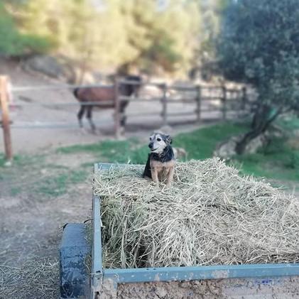 My little helper!_#establodecrystal #hor