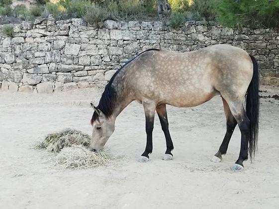 Meet Azara, she is a sweetheart ❤️_#esta