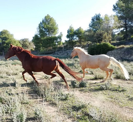 A windy day and all horses going crazy �