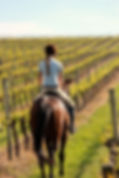 horse in a vineyard.jpg