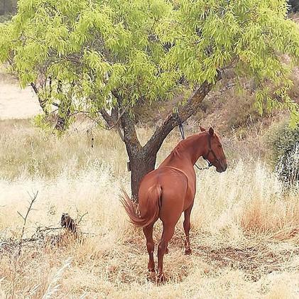 A little rest_#establodecrystal#ridingho