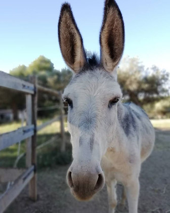 Chilli 🌶 our little rescue donkey_#esta