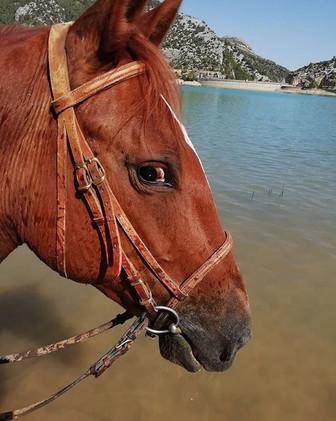 Mum this is great!!!_#horsefun #waterhor