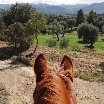 Que Vista!!_#establodecrystal #horseridi