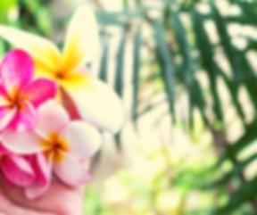 פרח תאילנד.png