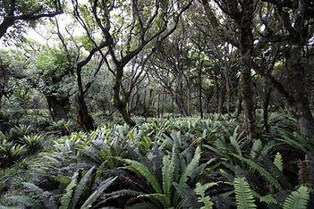 Stewart Island Wildlife