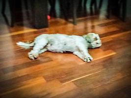 Pet Sitter, Dog Walker , Pet Walker Santos