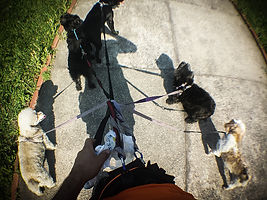 Passeios, Dog Walker, Pet Walker Santos
