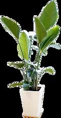 観葉植物2.png