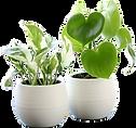 観葉植物3.png