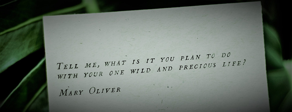 "Quote ""Tell me, what is it you plan to do with your one wild and precious life? Mary Oliver"