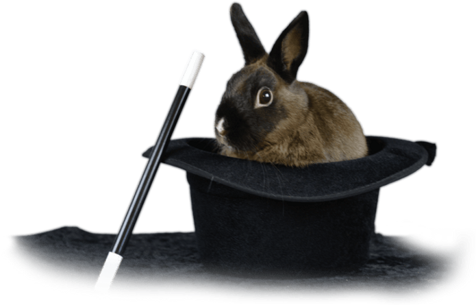 meet mr wiz the magician rabbit