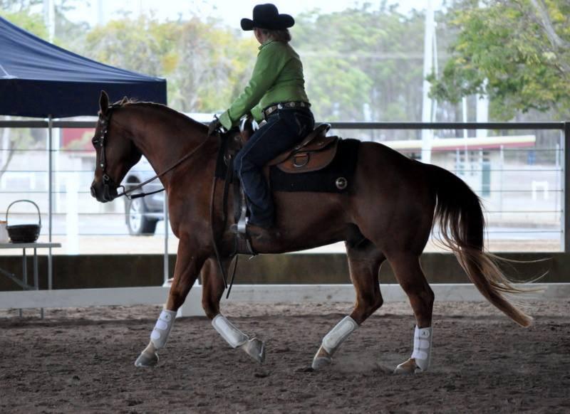 sue horse photo.jpg