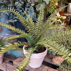 Artificial fern.jpg