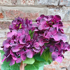 Purple Hydrangea spray