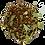 Thumbnail: ROOIBOS : EUCALYPTUS & AGRUMES
